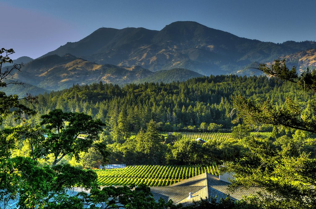 places to visit in napa