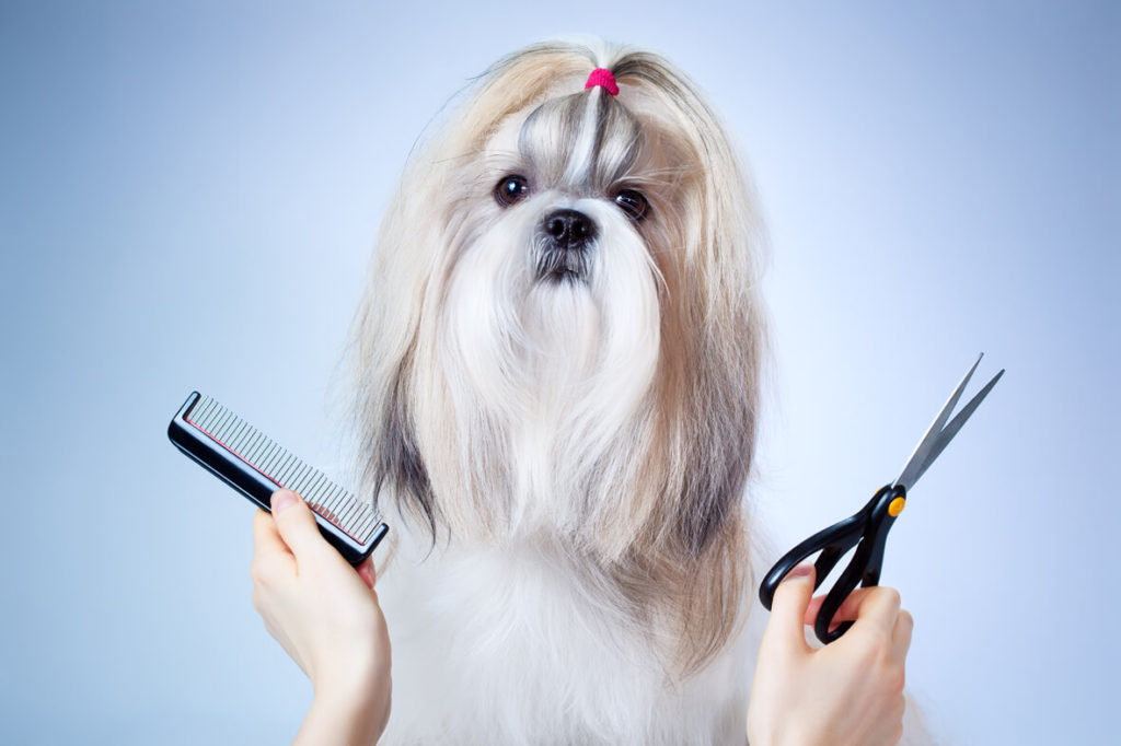 grooming dogs