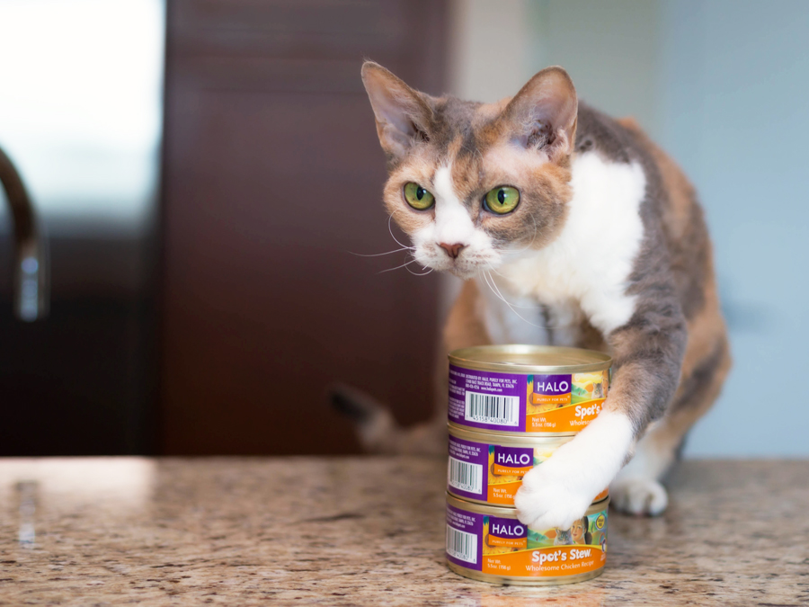 cat foods canned food